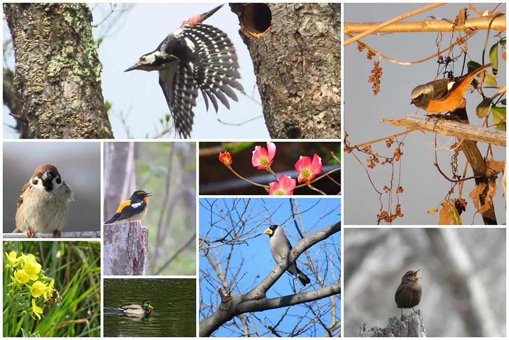 野鳥観察の写真